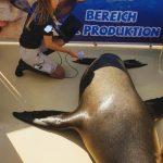 ecografia leon marino