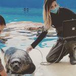 ecografia a una foca